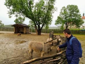 magarac i Vlado